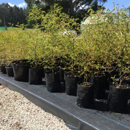 Ngāti Kea Ngāti Tuara Horohoro Native Tree Nursery Educational Scholarships