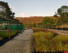 Landscape Technician – Horohoro Native Tree Nursery